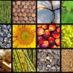 berbagai sumber energi biomassa