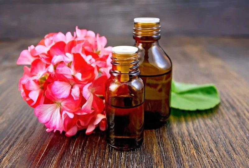 bunga geranium dan geranium essential oil