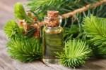 15 Manfaat & Kegunaan Cedarwood Essential Oil (Minyak Kayu Cedar)
