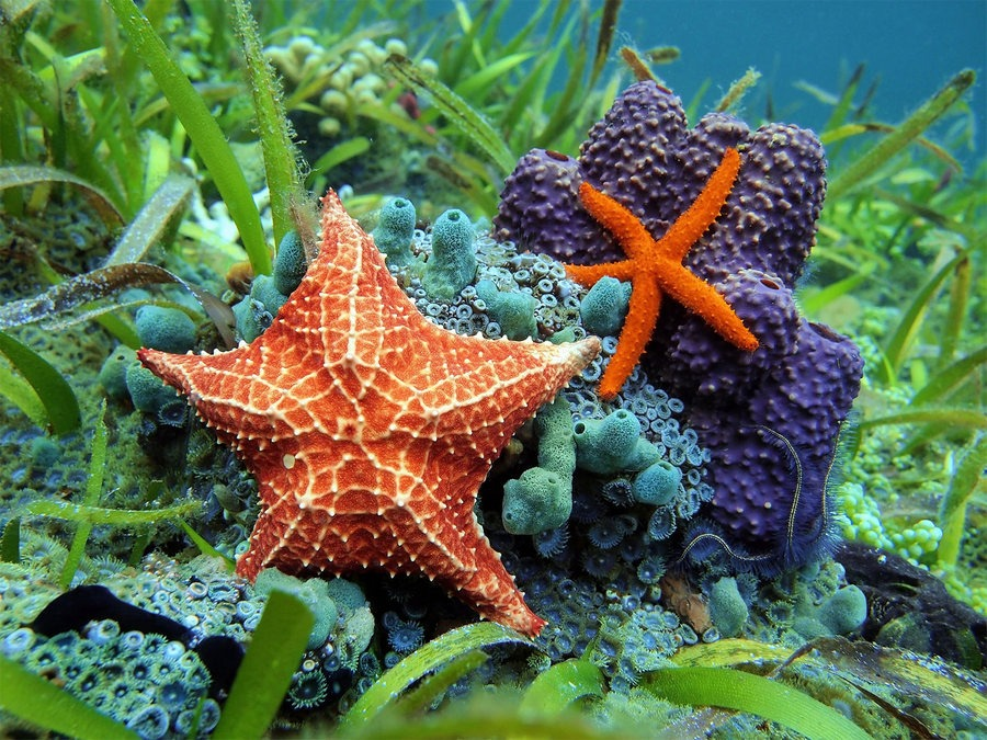 bintang laut berada di atas karang