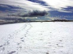 Snow Ridge 2