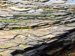 cracked flagstone formation, dark with tide