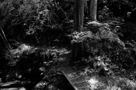Nishiyama 2 (www.blairthomson.com)