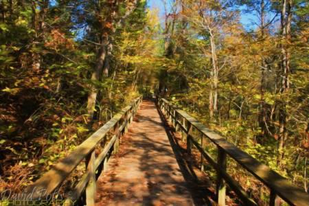 Mill Creek Boardwalk at Blanchard Springs