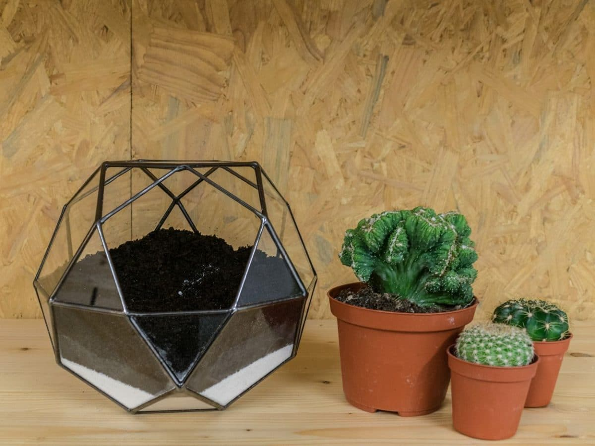 decorar con cactus un terrario