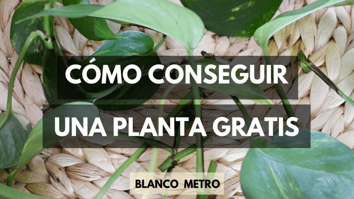 cómo conseguir una planta gratis