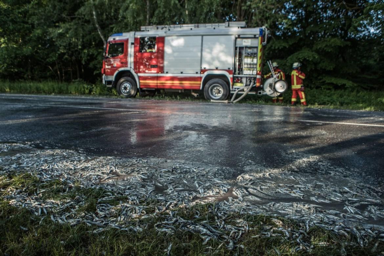 Igitt! – LKW verliert Fischladung auf Soltauer Straße