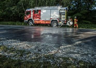 Igitt! - LKW verliert Fischladung auf Soltauer Straße