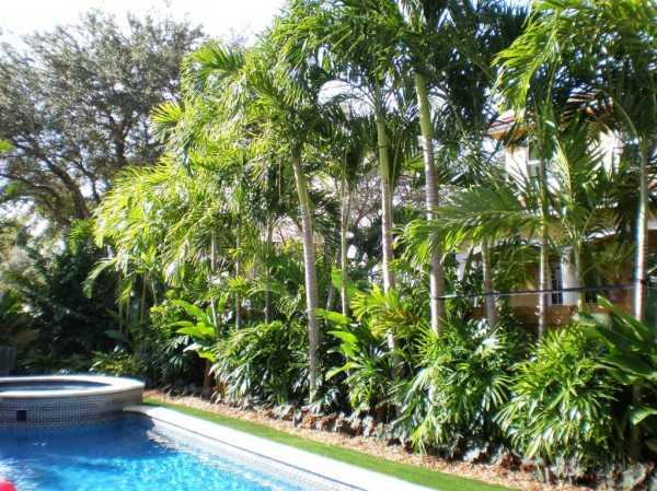 modern tropical landscape design