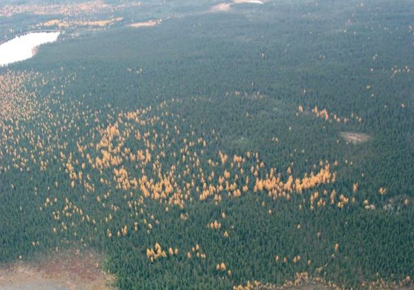 Geochemistry of Forest Rings in northern Ontario: