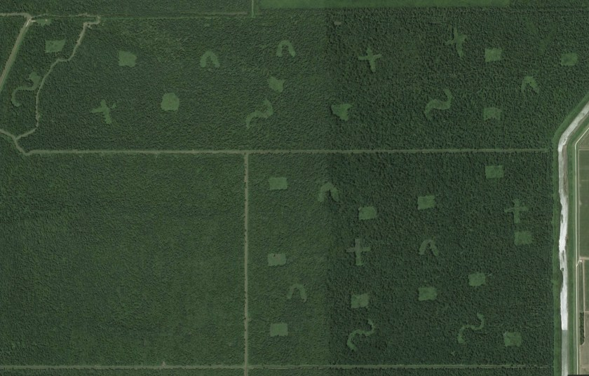 Overhead satellite map showing glyphs in forest