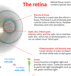 how the human eye works preview [ 1600 x 878 Pixel ]