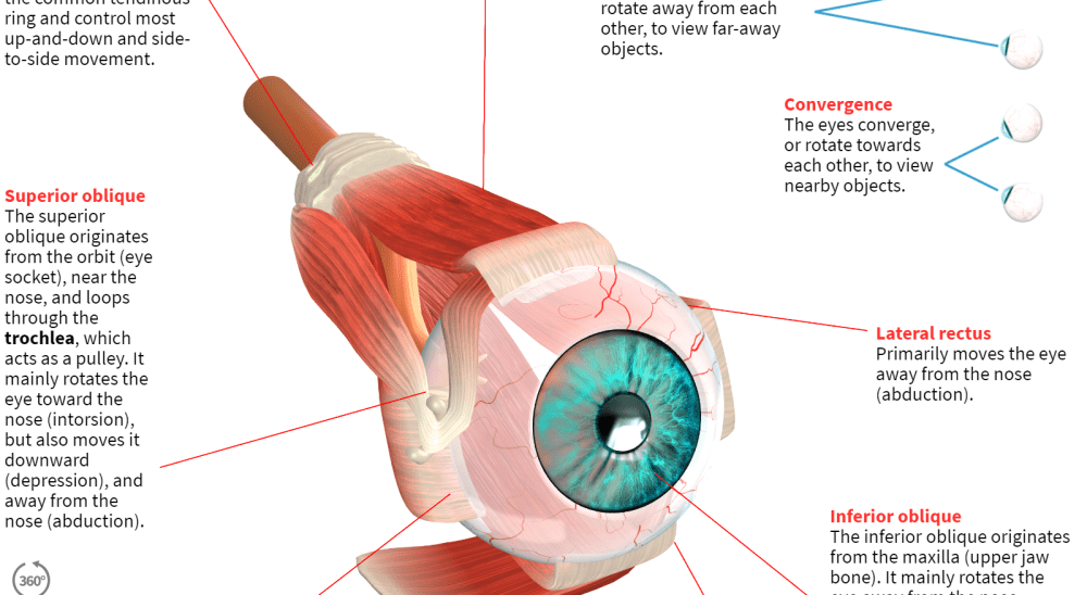 medium resolution of how the human eye works preview