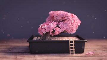 alex-bitsadze-bonsai