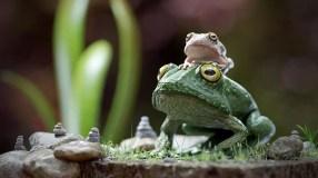 robert-proctor-ba-macro-frog