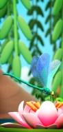 olivier-pautot-libellule