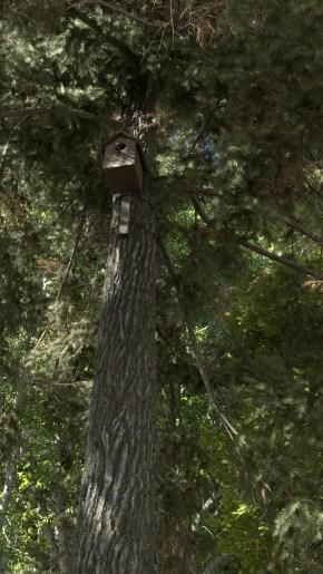 carl-roe-birdhouse-revised