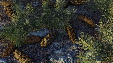 carl-roe-branchesandcones