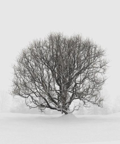 carl-roe-snowyoak3