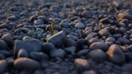 laura-ganis-stones-2