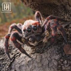 juan-hernandez-spider-02
