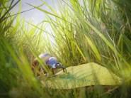 """Ladybug called """"Otto"""" by Xeonow"""