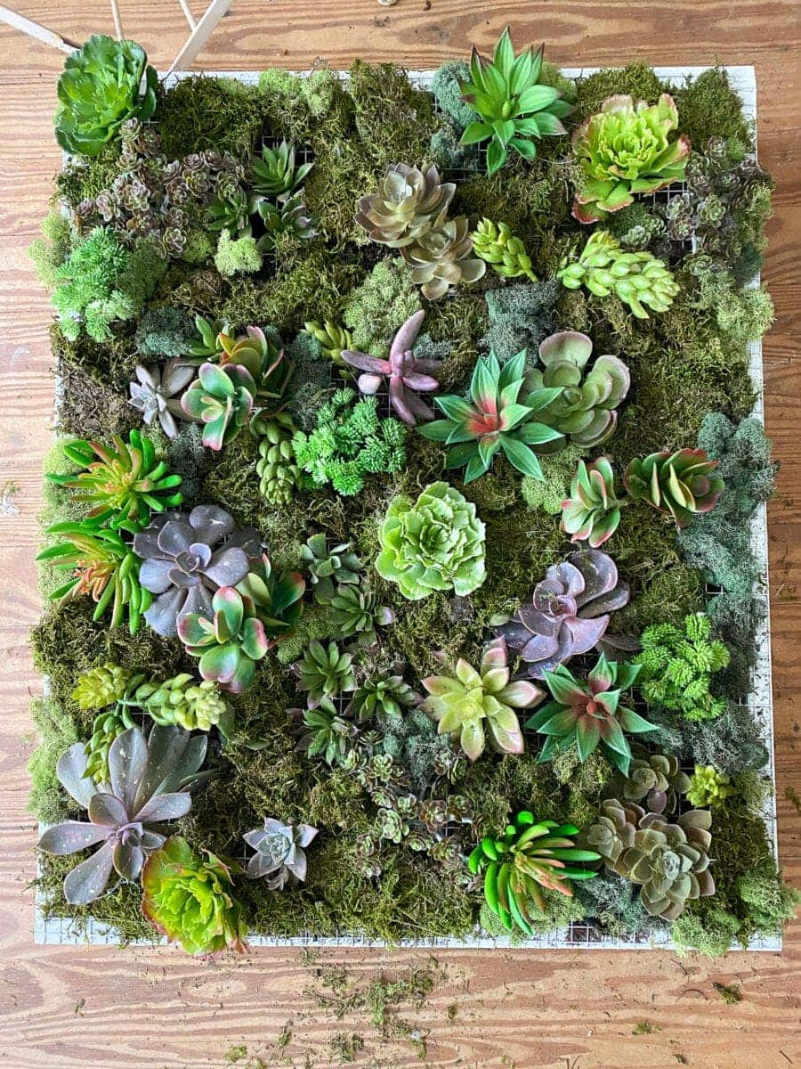 DIY Vertical Wall Planter | How to make a wall planter for either indoors or outdoors using scrap wood, moss, and succulents for the perfect spring or summer gardening project.