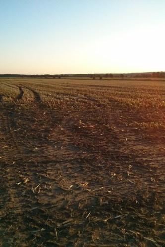 Abgeerntetes Feld in der Dämmerung