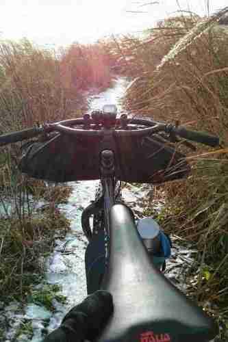 Schmaler Trail durch das Schilf.