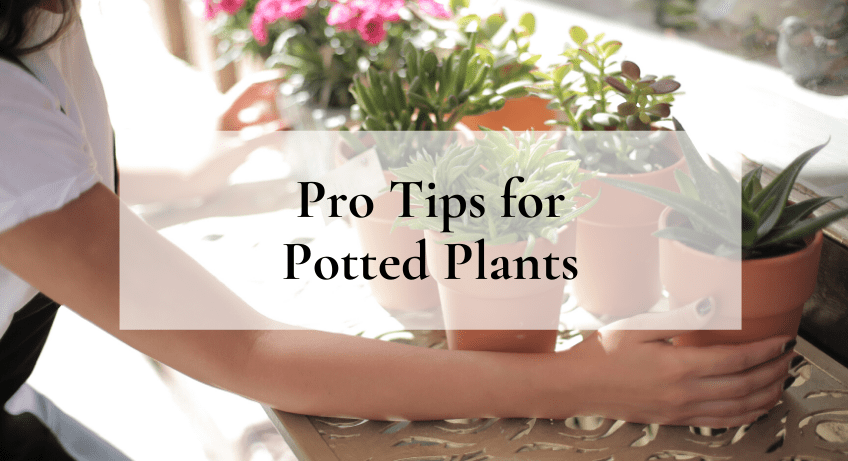 Pro Tips for Potted Plants