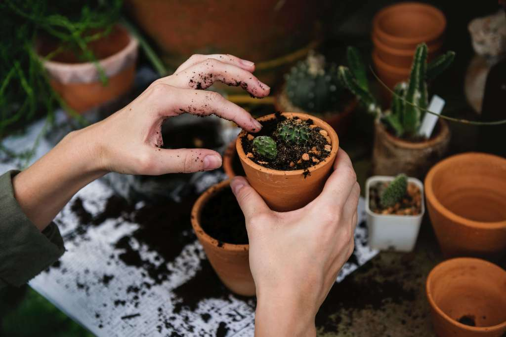 soil for potted plants