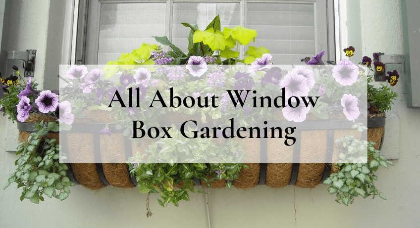 All About Window Box Gardening