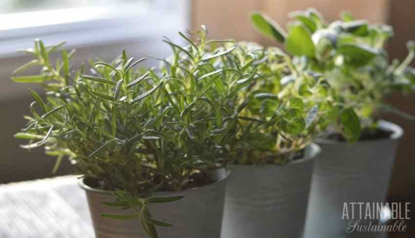 Windowsill Herb Gardening