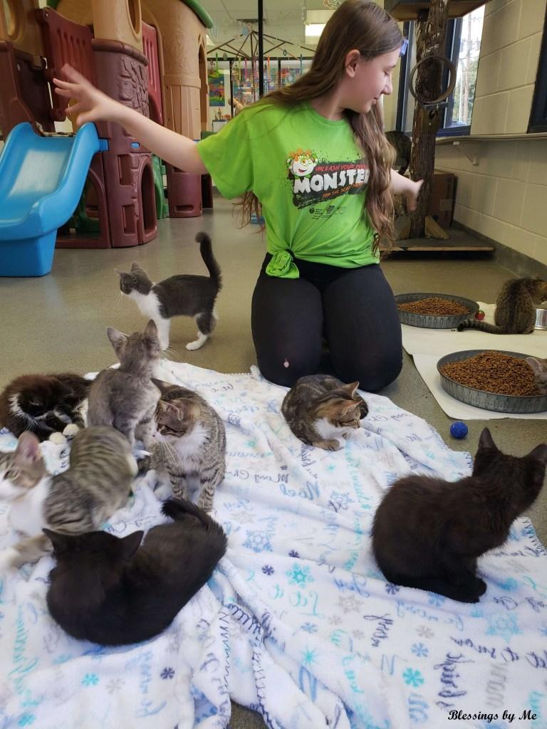 Volunteer at an Animal Shelter - Money-Free Weekend Idea