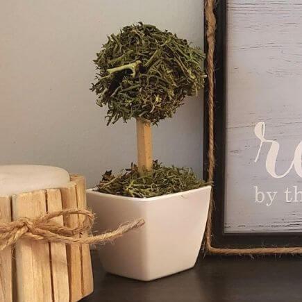 mini topiary tree