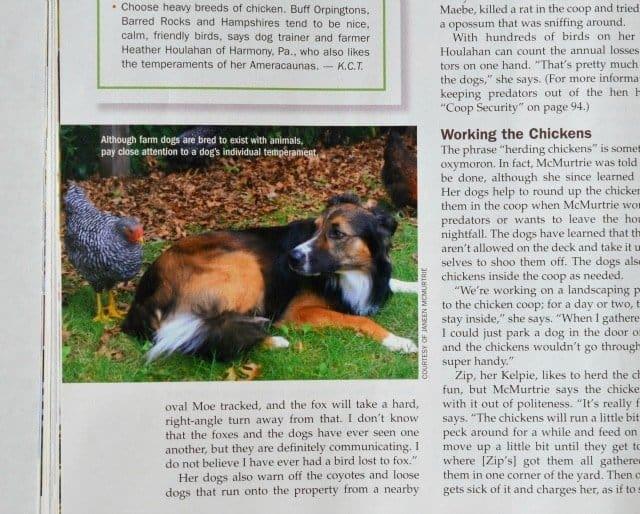 chicken magazine 5