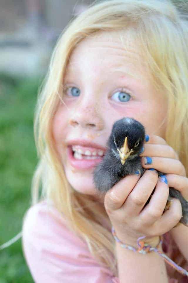 chicks with May, kids raising chickens, backyard chickens