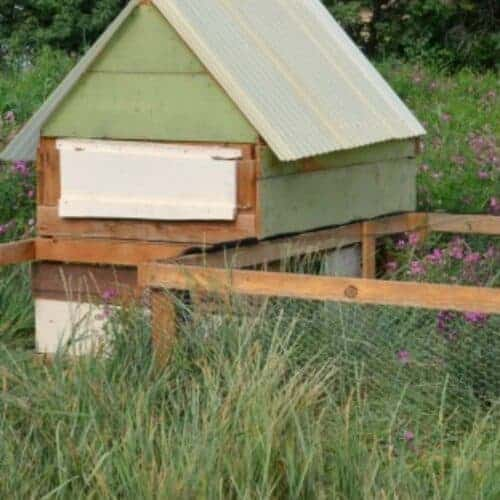 The Complete Guide to Building A Chicken Coop