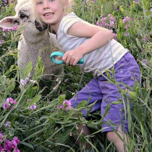 Raising baby sheep: the cutest animals around