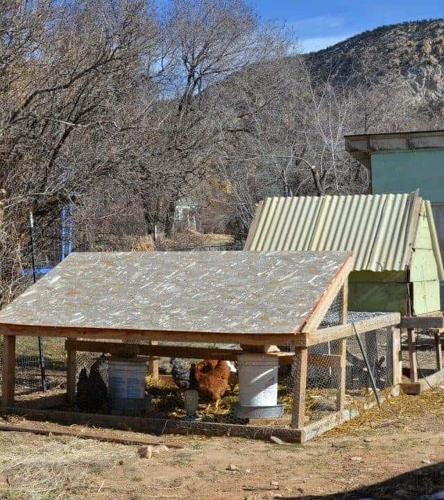 Backyard Chickens in the Winter