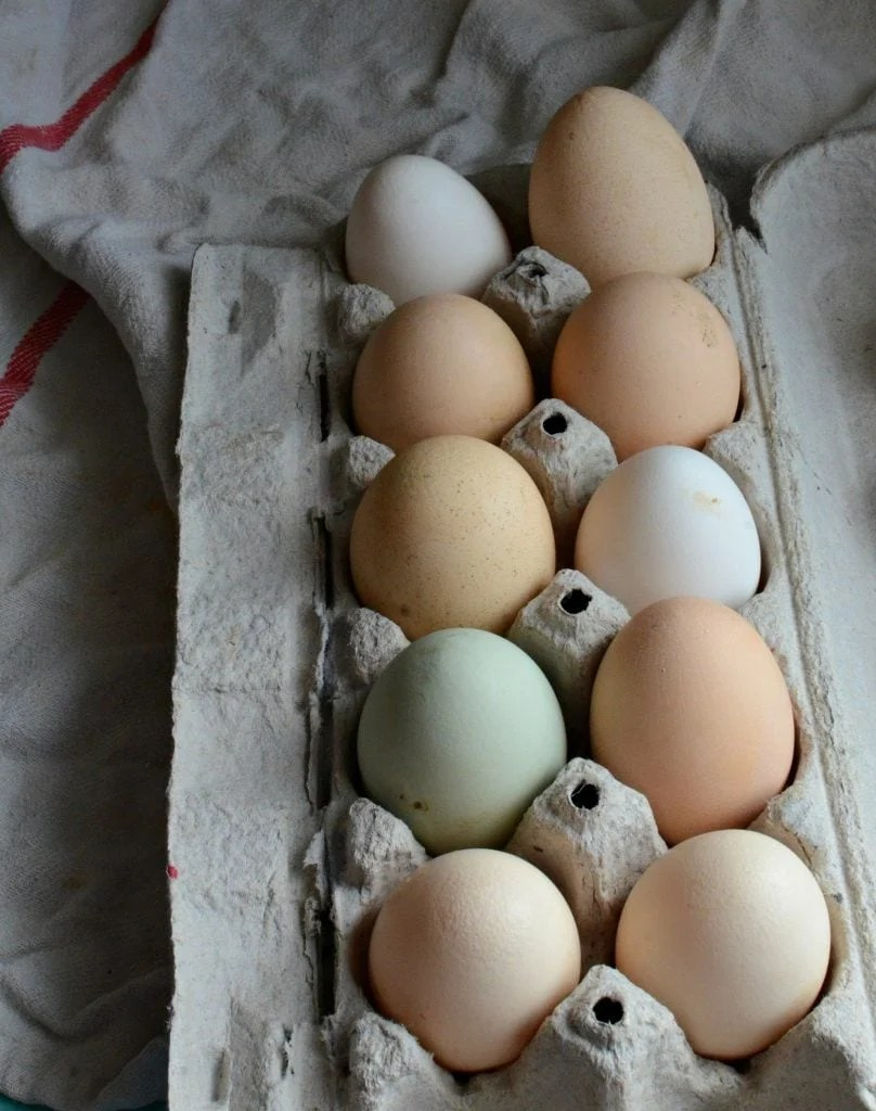 Egg Carton Labels Explained (Free-range, cage-free, organic? What's the difference?)