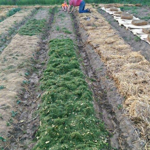 Farm and Garden Update: June