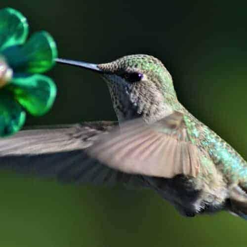 The Best Homemade Hummingbird Food Recipe