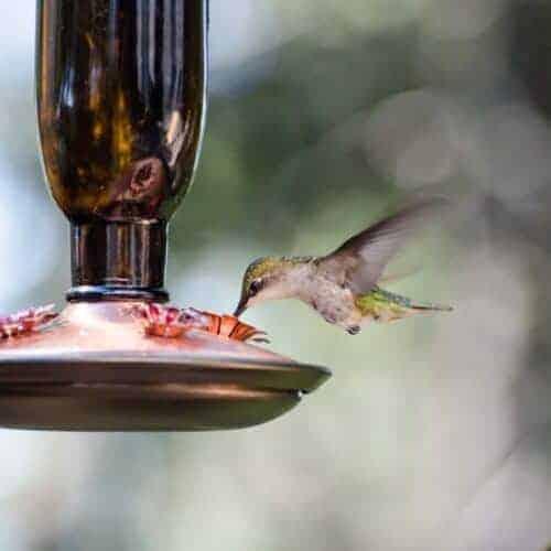 The Best Ways to Set Up a Hummingbird Feeder
