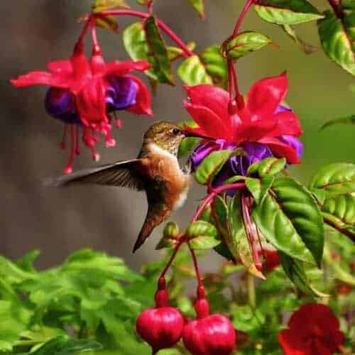 Little Known Ways to Attract Hummingbirds to your Garden