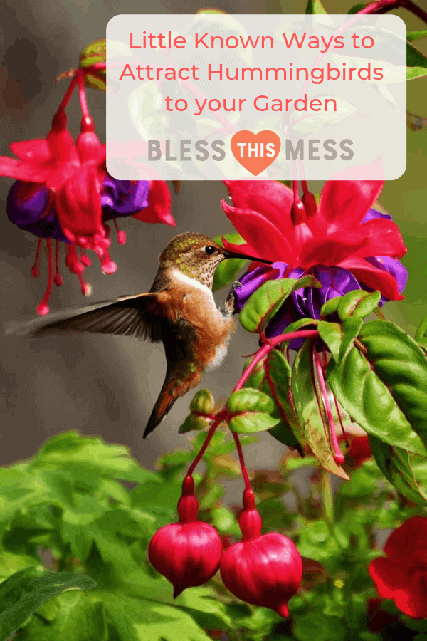 Get to know a few of my favorite tips and tricks for how to attract hummingbirds to your garden this summer.