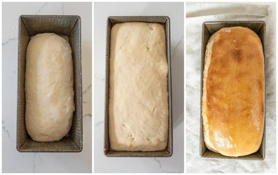 progression of sourdough bread in baking pan rising and then baked