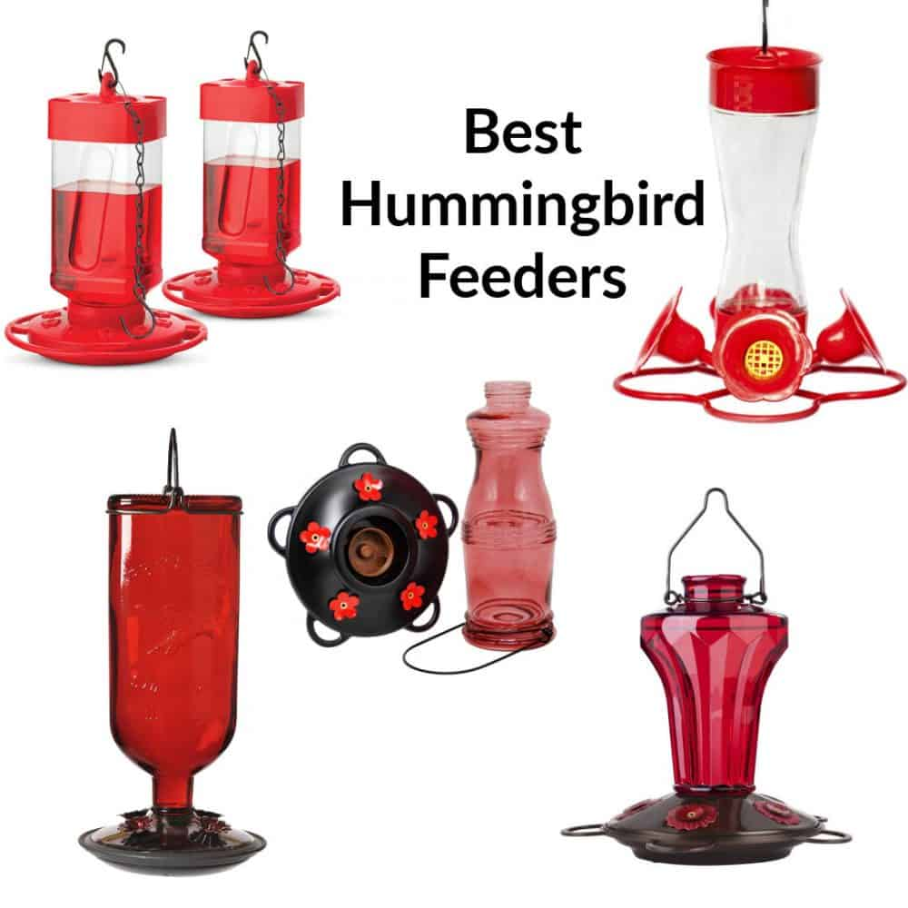 collage of humming bird feeders