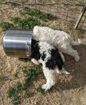 two puppies with their heads in a large pot