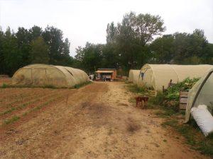 Les tunnels du site maraîcher du Village
